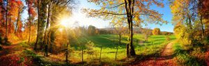 Quelle: smileus_fotolia.com/Herbst