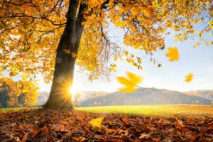 Quelle: eyetronic.fotolia.com/Herbstferien